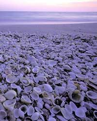 10 Best U.S. Shelling Beaches - Articles | Travel   Leisure - This article has a side bar on when to go shelling, perfect for Krissy and I when we go hunting in Oceanside.