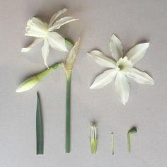Разбор цветов. Копилочка лета -творчество и вдохновение.