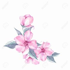 Picture of Watercolor flowers. Floral branch, isolated on white background stock photo, images and stock photography. White Roses Background, Document Sign, Banner Printing, Facebook Image, Single Image, Image Photography, Watercolor Flowers, Backdrops, Stock Photos