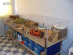 Amazing Guinea Pig Cages   Guinea Pig Hub