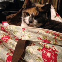 Even Lady Cat loves her Cath That Bag! Hopeless Romantic, Cat Love, Love Her, Cats, Animals, Gatos, Animais, Animales, Animaux
