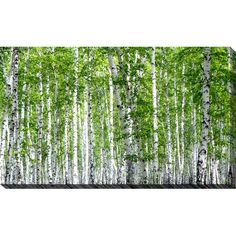 Beautiful 'Birch Trees III' Photographic Print on Wrapped Canvas by Millwood Pines Wall Art Decor from top store Metal Wall Art, Framed Wall Art, Framed Art Prints, Wall Art Decor, Canvas Wall Art, Canvas Prints, Wall Murals, Painting Frames, Painting Prints