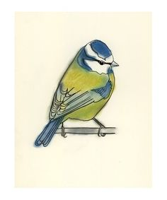 Her illustrations are wonderful!!  Blue Tit Bird Art -  Little Blue Tit - 4 for 3 SALE 4 X 6 print