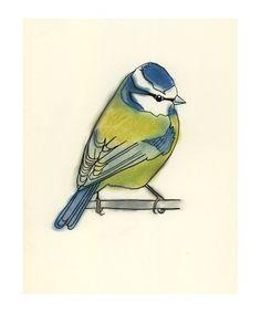 Her illustrations are wonderful!!  Blue Tit Bird Art -  Little Blue Tit - 4 for 3 SALE 4 X 6 print