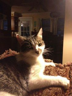 Felicia SchwartzEast Haven Animal Shelter lost cat..name is Farrow,neutered,appox 5 yrs old...lives behind Circle Lanes..missing since sun 6/8.......please help find him 668-9196