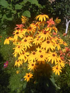 Dream Garden, Bonsai, My Dream, Gardening, Lawn And Garden, Yard Landscaping, String Garden, Horticulture