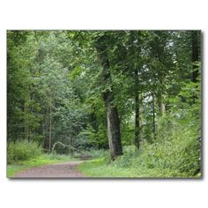 Lush Green Forest Postcard #postcrossing