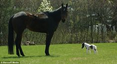 Einstein, the worlds smallest pony at 20 inches high. I love him, so cute!