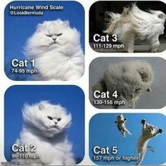 In need of some serious stress relief this crazy hurricane season? Check out these 25 Hilarious Hurricane Memes You Need To See. Funny Cat Memes, Funny Cats, Funny Animals, Cute Animals, Animal Memes, Animal Humor, Stupid Animals, Funny Animal Pictures, Best Funny Pictures