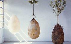 ¿Quieres convertirte en un árbol después de morir? Ahora es es posible