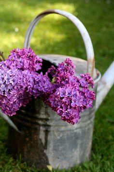 april flowers | lilac