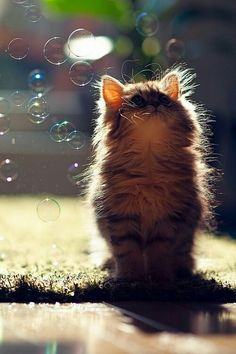 Kitten with bubbles