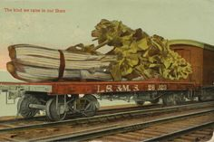 The Daily Postcard: More Giant Vegetables