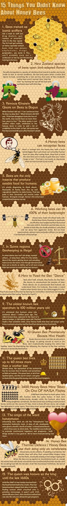 15 things you didn't know about honey bees [Infographic]