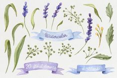 Watercolor set with Lavender Flowers by NataliVA on @creativemarket: