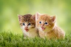 Image result for cut kittens