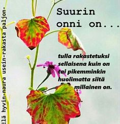 Finnish Words, Herbs, Love, Friends, Quotes, Amor, Amigos, Quotations, Herb