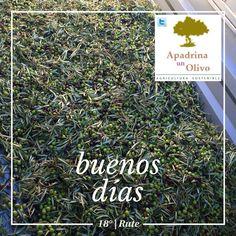 Yes, weekend! ☛ Disfruta de Córdoba   haciendo #OleoTurismo, te enseño como recogemos esta cosecha para #AceiteTemprano. Cards Against Humanity, Olive Tree, Harvest