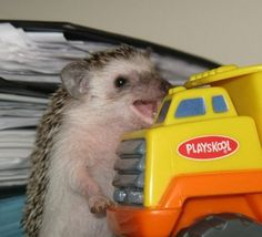 Diesel and Heavy Duty Truck Mechanic | 30 Lucrative Occupations For Hedgehogs