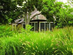 field of grasses/Pennisetum alopecuroides, surrounds farmhouse