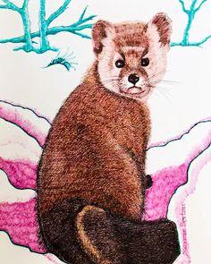 Pine Marten in Winter Ontario Canada Pine Marten, Canadian Art, Ontario, Canada, Winter, Prints, Animals, Winter Time, Animales