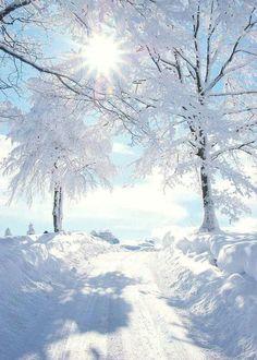 Photo: Sun shining on a beautiful winter wonderland! Winter Love, Winter Snow, Winter Christmas, Winter White, Snow White, Christmas Morning, Christmas Presents, Christmas Time, White Pic