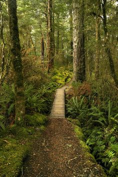 Kepler Track trail | New Zealand. Makes you wanna hop on your mountain bike, doesn't it?