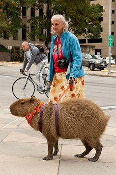 Grandma and her Capybara.