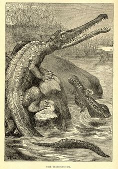 Teleosaurs (Jurassic marine crocodiles) from Sea and Land (1887) by Buel. HD. There are many more images from this book on this webpage, most of which are pretty insane pictures of people being captured/eaten by various sea monsters, crocodiles, sharks, hippos, a polar bear, swordfish, chimps, ourangutans, and cannibals. https://www.flickr.com/photos/stevelewalready/sets/72157600541886427