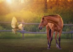 "© Debby Herold, Calgary, AB www.debbyherold.com  Featured in <a href=""https://iso.500px.com/equine-ecstasy-30-most-popular-horse-photos-on-500px/?utm_source=500px&utm_medium=social&utm_campaign=sep14_730AM_equine-ecstasy-30-most-popular-horse-photos-on-500px"">Equine Ecstasy: 30 Most Popular Horse Photos on 500px</a>  Owl composite by Captured by Carrie Photography.  If you see this photo on the net labeled &quo..."
