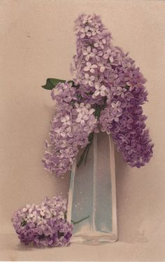 Illustrated Beautiful Glass Vase with Purple Lilacs by decorables