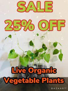 Growing Plants Indoors, Herbs Indoors, Growing Herbs, Honeydew Plant, Cucumber Plant, Organic Herbs, Organic Vegetables, Organic Gardening, Buy Flowers Online