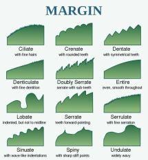 How to Identify a tree leaf using shape, margin, and venation.: Leaf Edges or Margins