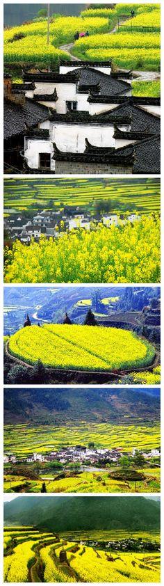 江西 婺源的油菜花田….                                       Wuyuan County, Jiangxi, China