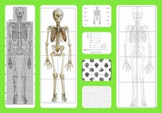 Free printable life-sized child and adult skeletons, skull puzzles and more! - A Magical Homeschool Human Body Activities, Science Activities For Kids, Science Fair Projects, Science Lessons, Science Biology, Teaching Science, Life Science, Human Body Unit, Human Body Systems