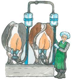 Lehmät lypsyllä