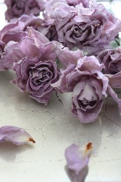 Lilac roses ~