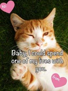 21 Valentines To Send To Animal Lovers