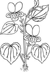 This interesting flower would make for great coloring fun for your kids at home, in the classroom, or anywhere else kids love to color. Our FREE printable coloring pages are a great way for your little ones to express their creativity! Monster Coloring Pages, Fall Coloring Pages, Flower Coloring Pages, Coloring Pages For Kids, Colouring Sheets, Kids Coloring, Open Office, Inside Out Coloring Pages, Kindergarten Coloring Pages