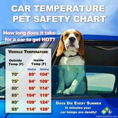 Summer fun still needs to be safe! Don't leave your dog in the car for long. A little time is all it takes for heat to kill!