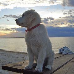 I love this picture, dogs and the ocean!