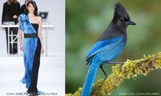 Fashion thru the eyes of a real life birder, by Danielle at PacificBird