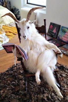 #photo #art #dummy #scarecrow #goat #taxidermy #artobject #animal #livestock #beasts #contemporaryart #modernart #postmodern #jpg #postmodernjpg