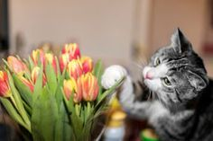 Cat Friendly Plants - a long list. Also a list of plants poisonous to cats.