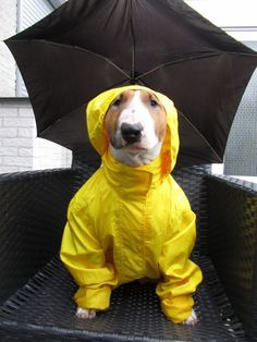 @Cindie Heck Sophie needs this..she hates the rain