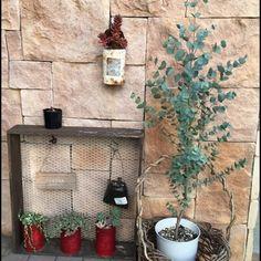 ユーカリの品種は700種以上あると言われていますが、中でも葉の丸いマルバユーカリ・ポリアンセモス(ポポラス)・グニ―、ハート型の葉が可愛らしいハートリーフユーカリ・オービフォリアが人気の品種です。