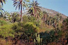 Parques nacionales de chile La Campana