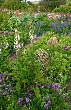 Bamboo cloches to protect vegetable plants in the potager surrounded by chives, strawberries, catmint and self seeded white foxgloves - Mindrum, nr Cornhill on Tweed, Northumberland, UK