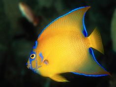 coral reef fish - Google Search  COLORS