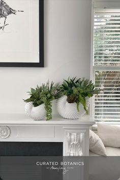 Faux Succulents, Faux Plants, Nautilus Shell, Succulent Arrangements, Trees To Plant, Angles, Seaside, Shells, Texture